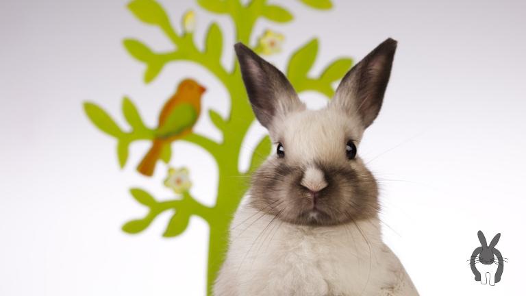 Bist Du wirklich bereit für Kaninchen?