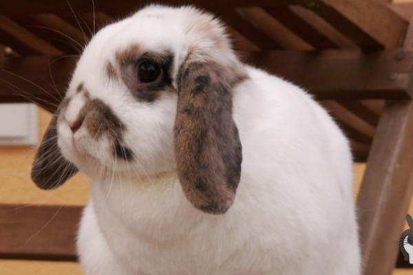 Niereninsuffizienz beim Kaninchen