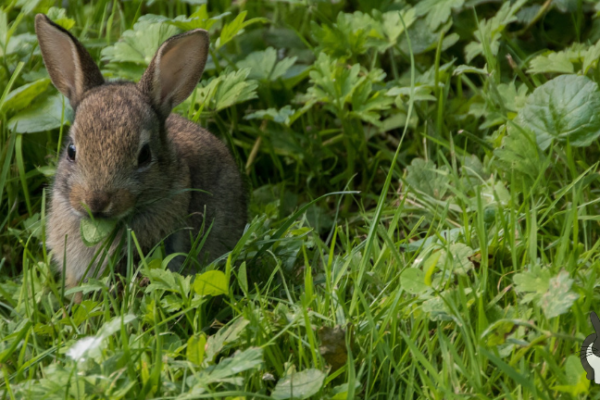 Kaninchenernährung