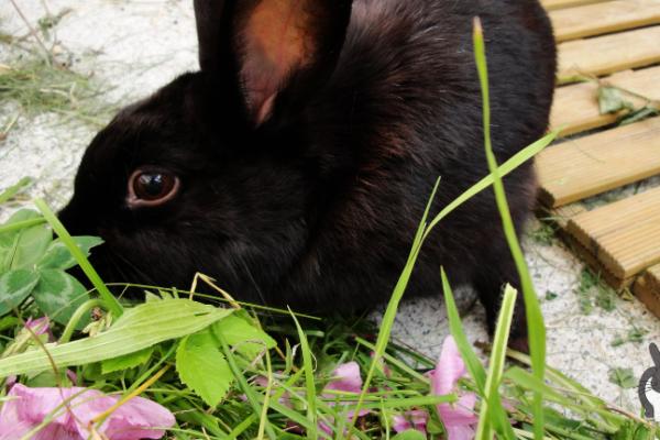 Mythen der Kaninchenernährung