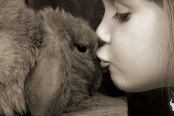 Herpesviren – Todesgefahr für Kaninchen