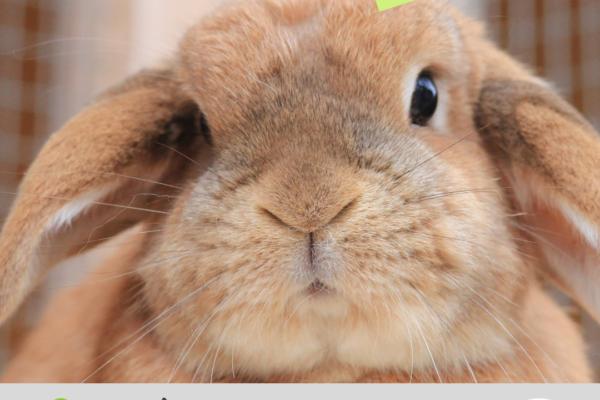 Kaninchenhaltung in der Corona-Krise